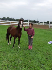 Pony mare for sale