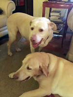 Jake & Daisy the Labs Lost their Mom & their Home …