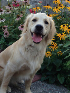 Flexible and Affordable Dog Walking/Boarding Services