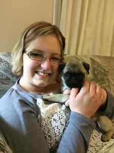 Pet sitter for Windsor and Essex County Windsor Region Ontario image 5