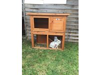 2 lionhead rabbit and hutch for sell