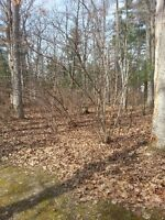 Wooded Building Lot
