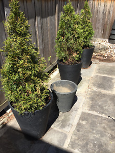 Eight All Year Round Insulated Planters