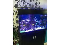 Marine fish tank 300ltr