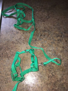 Brand new- Parrot Harness & Leash