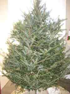 Looking For Free Artificial ChristmasTrees
