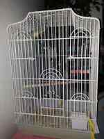 Tagged love bird with cage $50