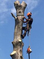 Fast acting tree service
