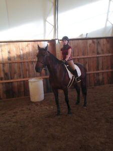 Standardbred for lease/part board