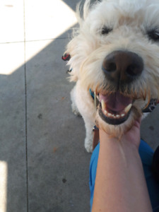 DOG WALKER AVAILABLE for Hamilton and Ancaster regions