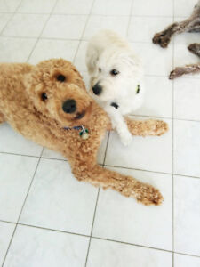 Dogs will have a lot of fun in our loving home style boarding.