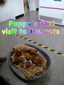 5 bueatiful jackrussell dogs forsale
