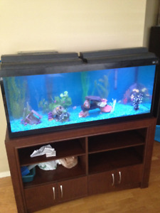 70 Gallon Fish Tank with stand and accessories