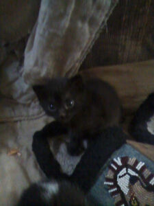 Urgent. Kitties that need a new home