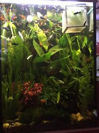 Fish tank +accessories for sale