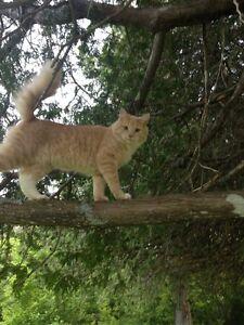 Lost Cat - Buddy