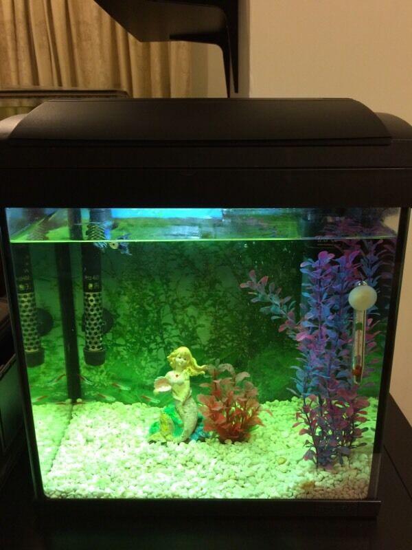 Fish tank superfish aqua 30 aquarium set all included for Aquarium 30 litres