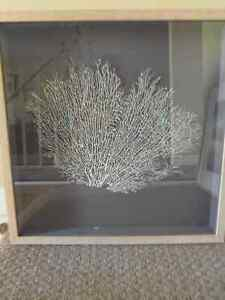 Large Framed and Mounted Coral Fan: Beautiful Marine Art! London Ontario image 2
