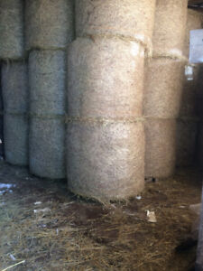 Hay Forsale