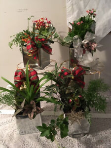 X-mas gift with plants