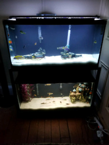 Fish and two 35 gallon tanks