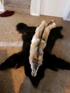 Bear/wolf hides