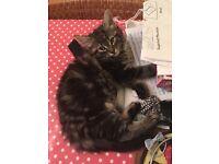 Kittens for sale --- £75 each