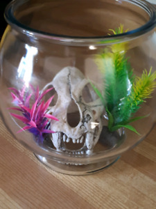 Fish bowl with accessories