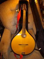 two octave mandolins