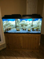 New Price drop! Huge aquarium with stand and all accessories!!!!