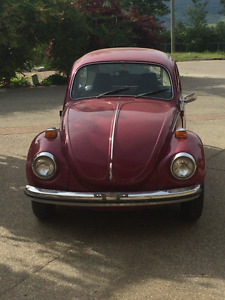 Beautiful Super Beetle