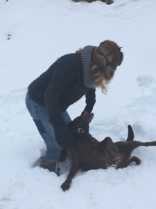 Caring Pet Service Goderich Area