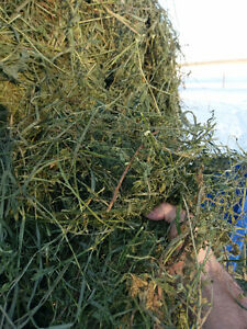 2nd cut alfalfa hay for sale