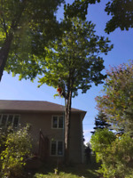 AFM Pro TREE CUTTING SERVICES