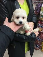 Lovely puppy need a home
