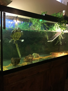 90 Gallon Turtle Tank w/ Aquatop Filter & extras