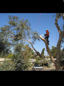 Tree cutting/ trimming/ removal