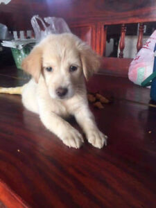 For Adoption: SAGO