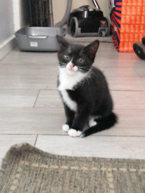 Male kitten ready for forever home(has carrier(