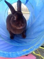 Bunny and cage for sale