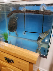 Turtles to rehome