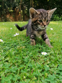 6 Cute and Playful Kittens (Tabbies + Tuxedos)