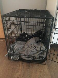 Cage à chien 24 x 17