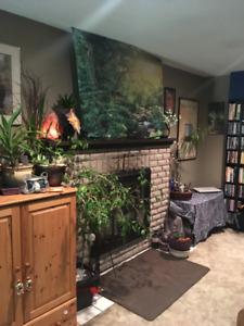 1bedroom suite for rent