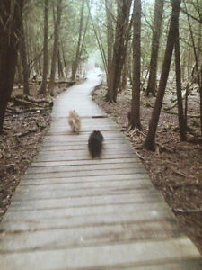 Experienced Dog Walkers in Guelph