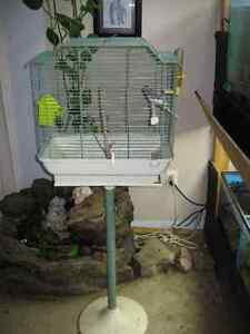 FANCY BABY BUDGIE WITH CAGE & STAND