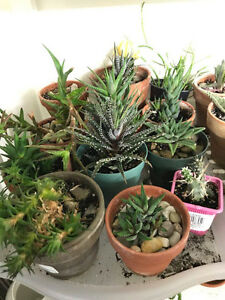 Cactus & Succulents for sale
