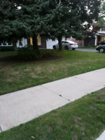 Lawn mowing service by freelancer