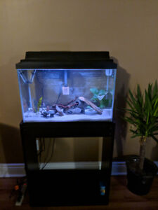 21 gallon fish tank aquarium and set up