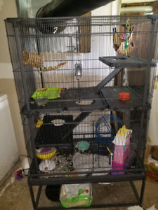 Sugar Gliders and pet nations cage